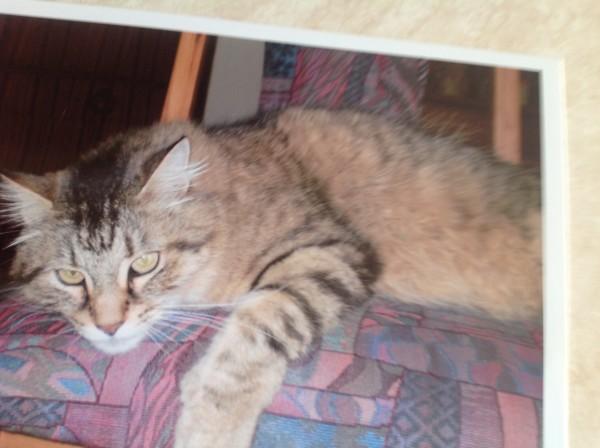 A sleeping Tiger in 2005.