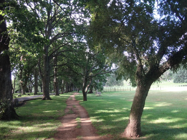 Yes, Cornwall Park is a beautiful place for a run!