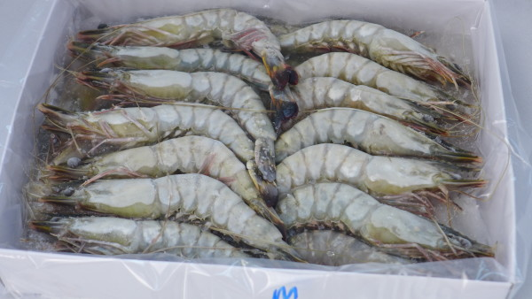 Fresh & Tasty Tiger Shrimps @ NTUC FairPrice | PrisChew ...