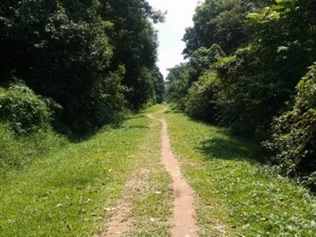 The Green Race takes place partly along the Green Corridor trails. [Photo taken from www.expatliving.sg]
