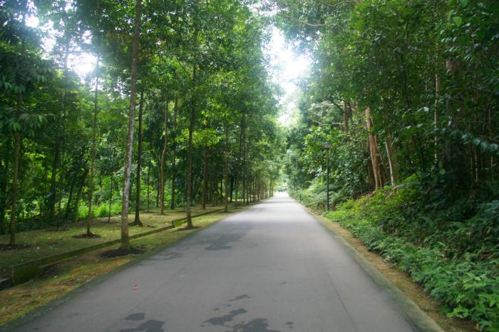 Head to Bukit Batok Nature Park to farm Scyther.