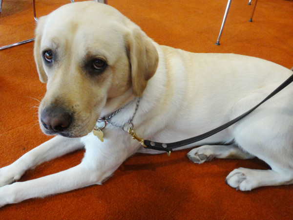 Melba, the sweet and adorable guide dog of one of the RunningHour committee members.