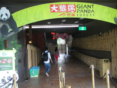 The giant panda forest.