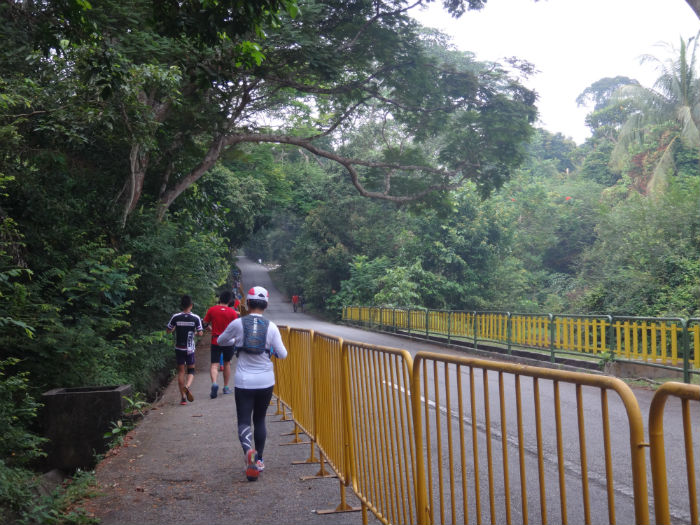 Runners heading out of the MacRitchie trails.