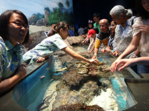 Touch Pool, where you can play with the fishes.