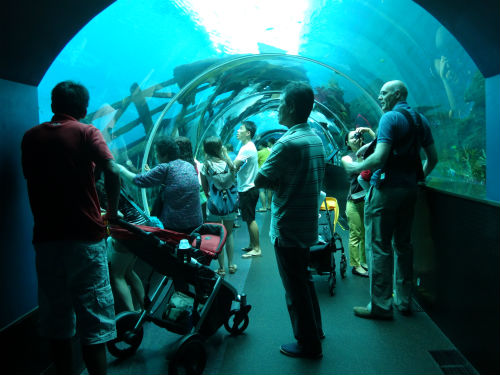 Visitors looking at the fish inside the tunnel.