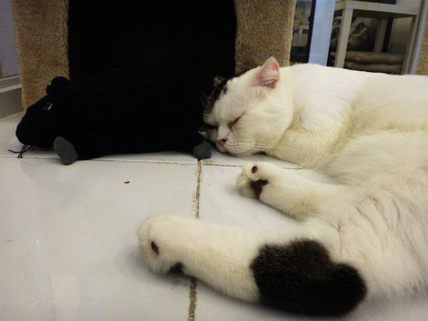 white-kitty-sleeping
